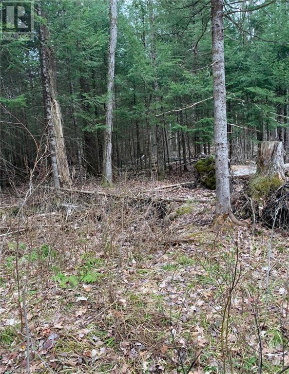 0 County Road 36, Trent Lakes, Ontario  K0M 1L0 - Photo 3 - 40101356