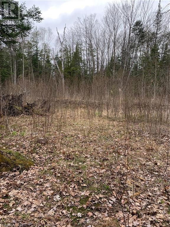 0 County Road 36, Trent Lakes, Ontario  K0M 1L0 - Photo 4 - 40101356