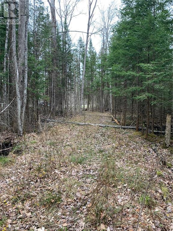 0 County Road 36, Trent Lakes, Ontario  K0M 1L0 - Photo 7 - 40101356