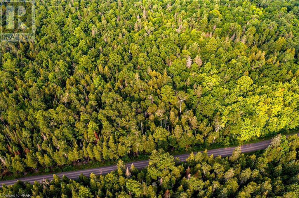 251 Ledge Road, Trent Lakes, Ontario  K0M 1A0 - Photo 4 - 40152605