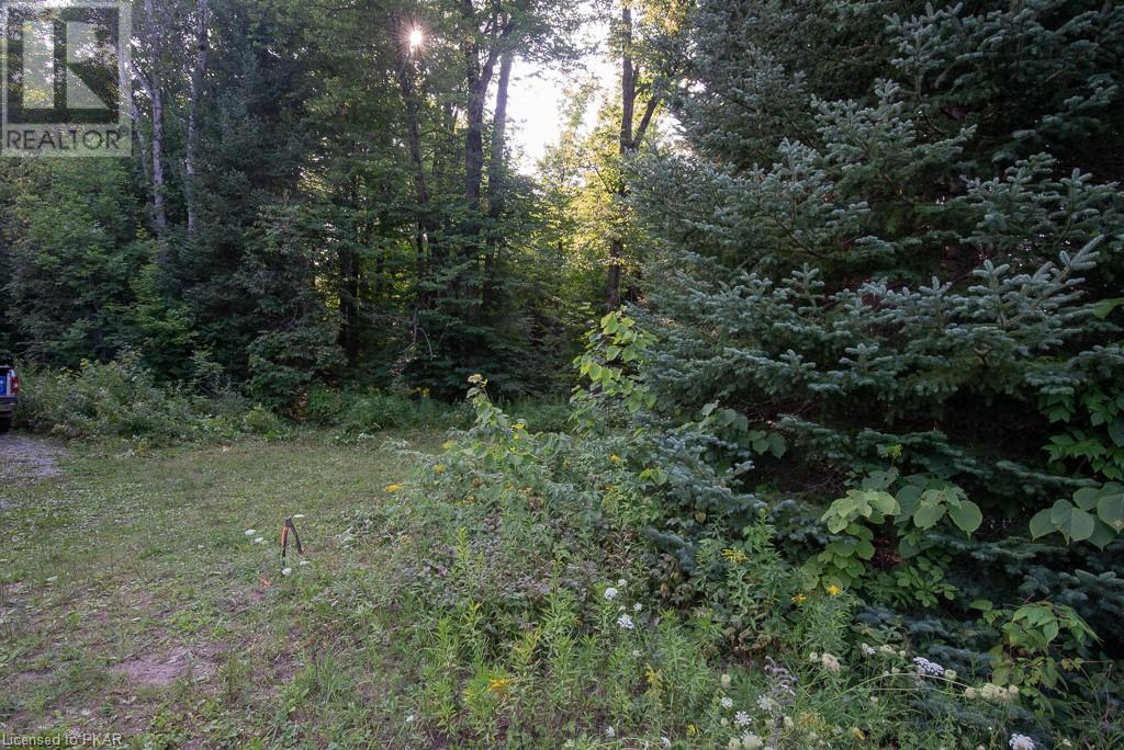 0 Pinery Road, Burnt River, Ontario  K0M 1C0 - Photo 11 - 40153599