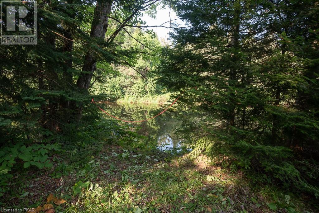 0 Pinery Road, Burnt River, Ontario  K0M 1C0 - Photo 13 - 40153599