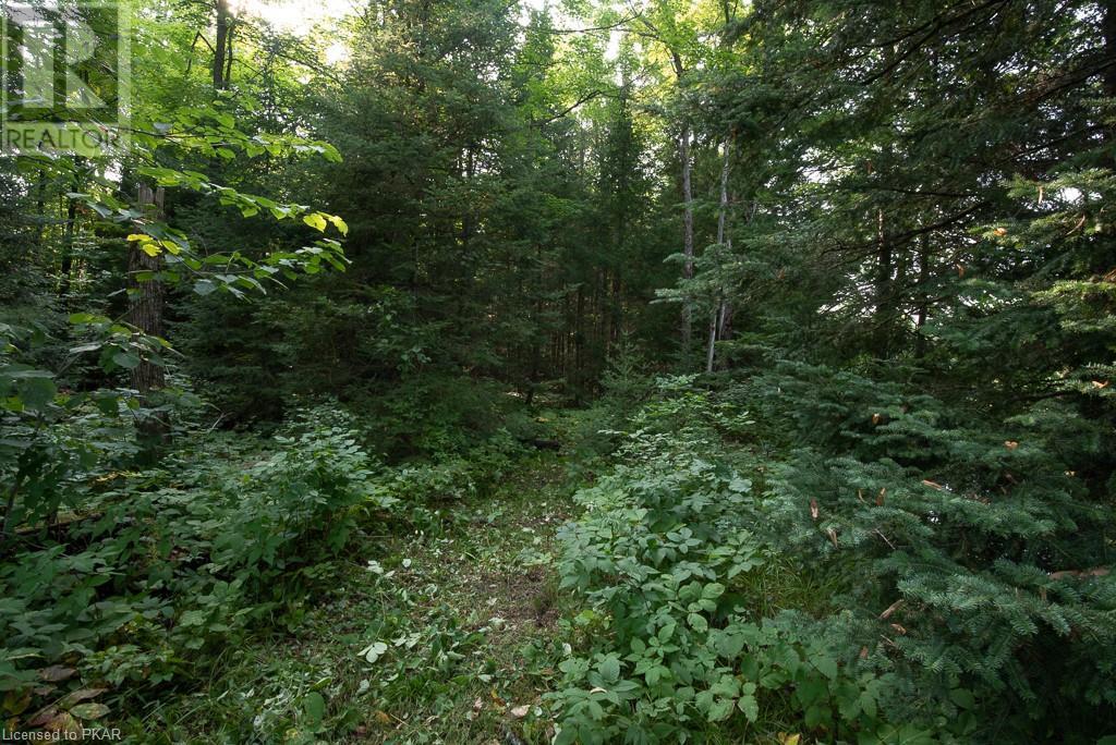 0 Pinery Road, Burnt River, Ontario  K0M 1C0 - Photo 14 - 40153599