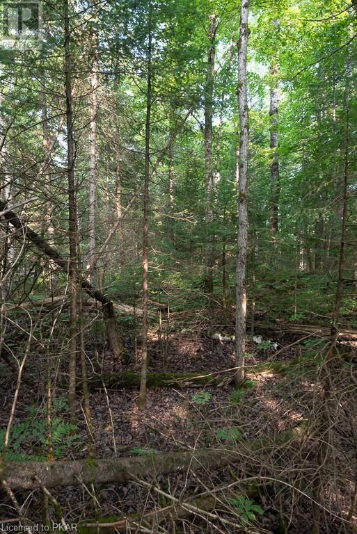 0 Pinery Road, Burnt River, Ontario  K0M 1C0 - Photo 16 - 40153599
