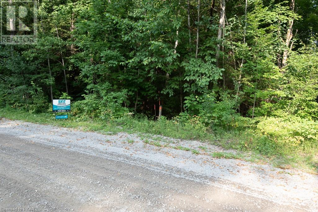 0 Pinery Road, Burnt River, Ontario  K0M 1C0 - Photo 4 - 40153599