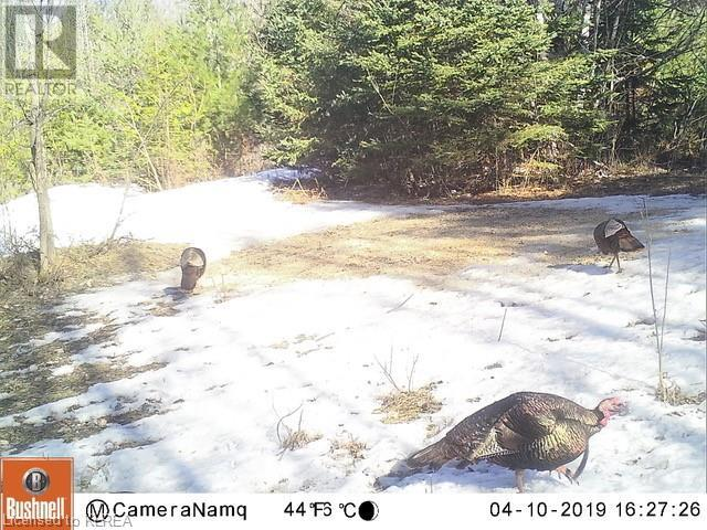 1072 Northline Road, Fenelon Falls, Ontario  K0M 1N0 - Photo 4 - 40157555