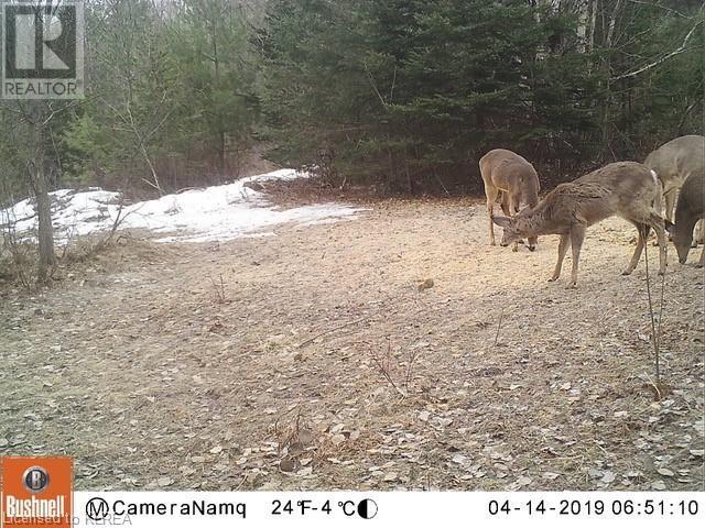 1072 Northline Road, Fenelon Falls, Ontario  K0M 1N0 - Photo 5 - 40157555