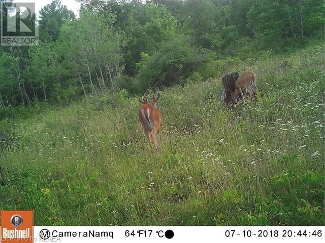 1072 Northline Road, Fenelon Falls, Ontario  K0M 1N0 - Photo 6 - 40157555