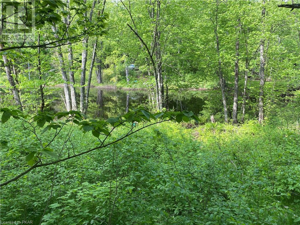 N/a Black River Road, Tweed, Ontario  K0K 1J0 - Photo 11 - 40160080