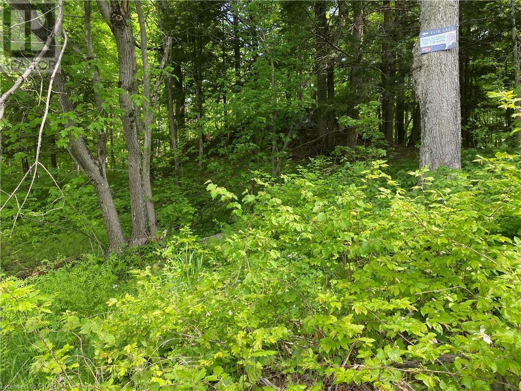 N/a Black River Road, Tweed, Ontario  K0K 1J0 - Photo 19 - 40160080