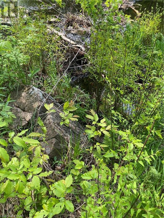 N/a Black River Road, Tweed, Ontario  K0K 1J0 - Photo 21 - 40160080